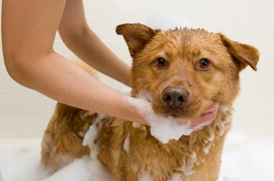 Rexpointe Dog Bath