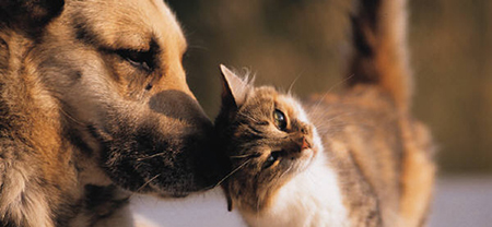 Dog and Cat Boarding Rates