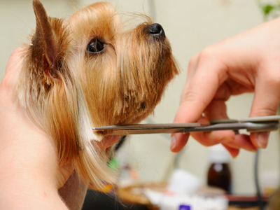 Rexpointe Small Dog Grooming