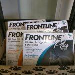 Frontline Cats & Kittens