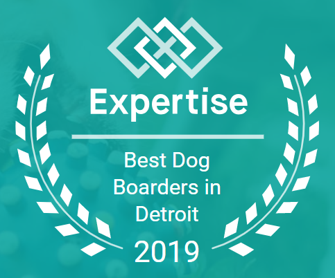 Best Dog Boarders 2019